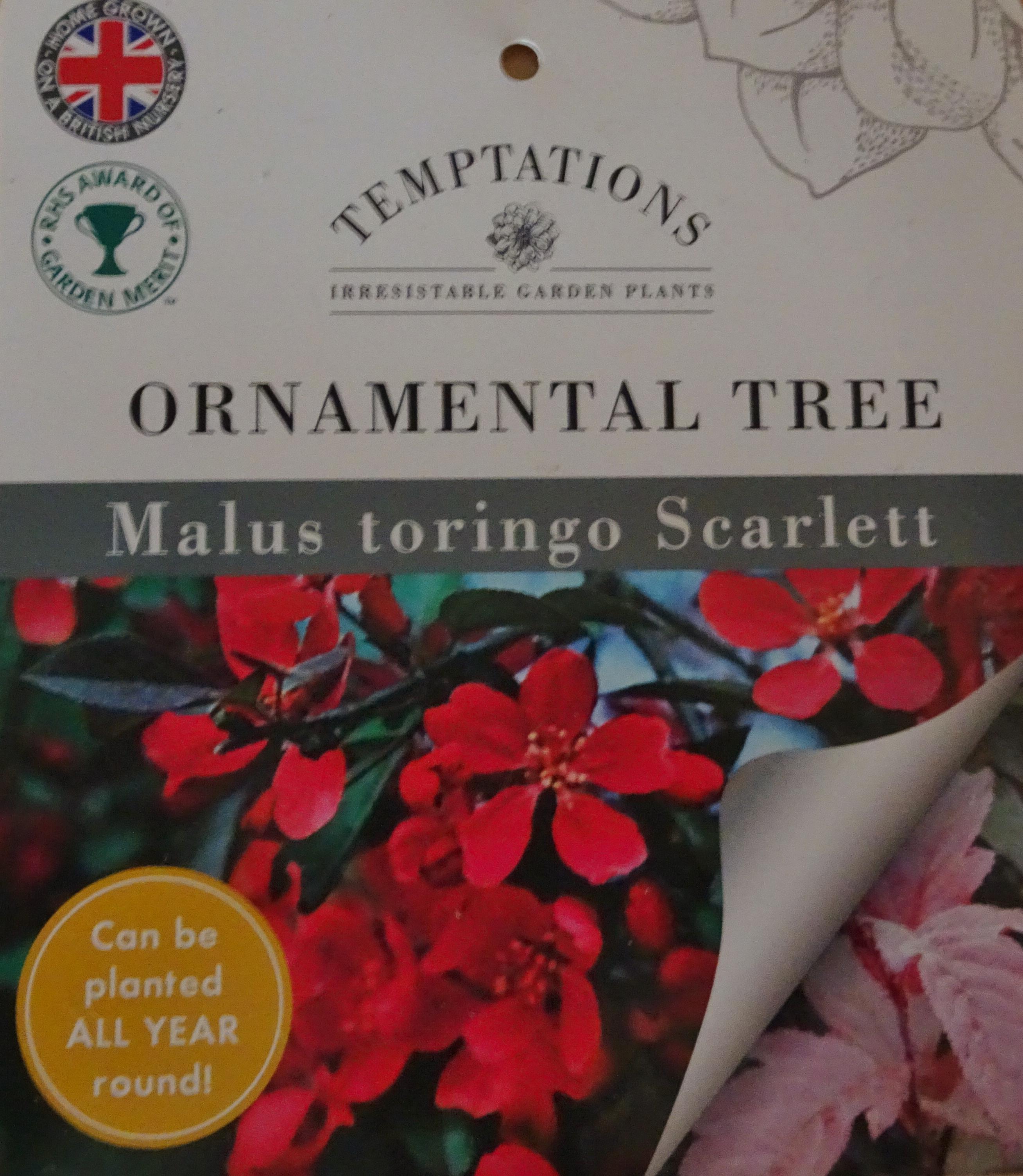 Wi Plant Centenary Tree Broadwindsor